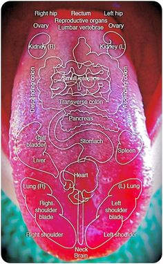 tongue diagnostic maps, chinese medicine, visual diagnosis, acupuncture in asheville, pathology Natural Antifungal, Tongue Health, Healthy Tongue, Health Chart, Nail Care Tips, Medical Art, Striped Nails, Natural Health Tips, Chinese Medicine