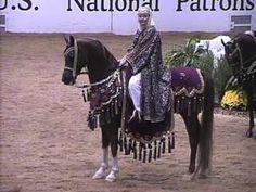 Arabian Horse Costume, Arabian Costumes, Horse Costumes, Arabian Horses, Watering Tomatoes, Horse Information, Horse Ears, Horse Saddles, Photo Reference