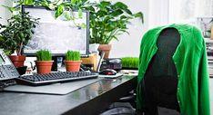 Tener plantas tanto en el interior de nuestra vivienda como en el exterior si disponemos de balcón, terraza o en el alfeizar de la ventana es bueno para nuestra salud.
