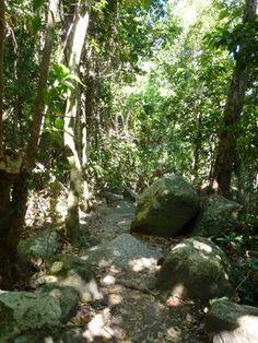Fitzroy Island trail....Great Barrier Reef, near Cairns, Australia