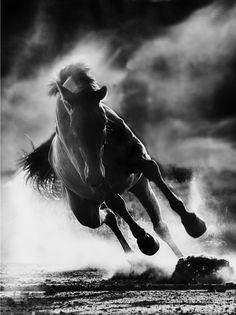 """No queremos pinturas cinéticas, sino enormes atardeceres cinéticos. Caballos corriendo a 500 kilómetros por hora... Fragmento de """"Déjenlo todo, nuevamente"""", Roberto Bolaño."""