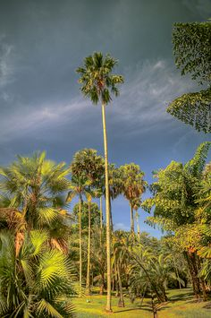 Kebun Raya Bogor (Bogor Botanic Garden), Bogor, Java - Indonesia ~ formerly Buitenzorg Gardens opened under the Dutch in 1817.