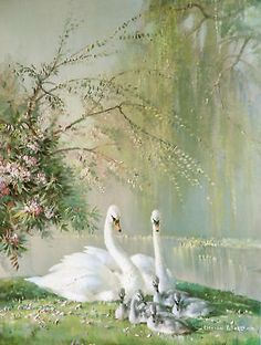 """""""Family in the Park"""" by Vernon Ward, aka Vernon Beauvoir Ward Prolific English Painter & Commercial Artist known for his Works of Flowers & Birds . Swan Love, Beautiful Swan, Beautiful Birds, Animals Beautiful, Cute Animals, Beautiful Family, Swan Pictures, Pretty Pictures, Bird Art"""