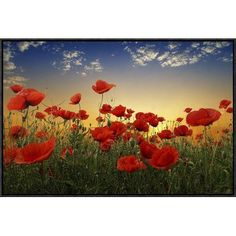 "Global Gallery 'Poppies' by Tais Framed Photographic Print Size: 20"" H x 30"" W x 1.5"" D"