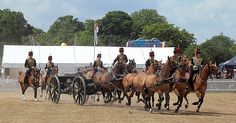 the king,s troop RHA Royal Horse Artillery, British Armed Forces, Troops, Royals, Britain, Camel, King, Horses, History