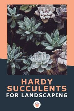 Hardy succulents are classed as those that can withstand frost and cold winters, sometimes extreme cold. This list of the 10 Best Hardy Succulents for Landscaping is geared towards those gardeners in Zone 3 to Zone 7 (Canadian Plant Hardiness Zone map) or thereabouts. #hardysucculents #landscapingsucculents #canadianplanthardinesszonemap Xeriscape Plants, Succulent Landscaping, Xeriscaping, Drought Tolerant Plants, Modern Landscaping, Succulents Garden, Planting Flowers, Vertical Garden Plants, Vertical Garden Design