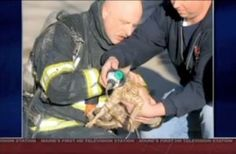 After the fire was knocked down, Bruce Johnson heard a cat crying from one of the rooms. When he investigated, he found a small orange cat, burned and barely breathing. He brought the poor, sweet thing out and began resuscitating her with a pet oxygen mask