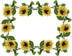 sunflower pics frame