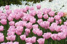 5 Things We Love About Spring - Dan 330 :)
