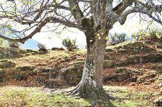 ¿Cuál es la #mitología que rodea los #Pirineos? ¿Qué #leyendas hay entre las #montañas de la #ValdAran? Ya puedes descubrir la #historia del #ValledeAran con la última entrada del #blog de nuestra #VidaVerneda #ecoturismo #animallover #Catalunya #Cataluña #camping