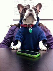 """""""So tell me Mooby.. What is the ROI on social media??""""  #FrenchBulldog"""