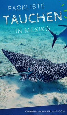 What to pack for your scuba diving trip to Mexico? If you plan to snorkel or dive in this beautiful paradise, be sure to check out my scuba diving packing list for Mexico. Mexico Vacation, Cruise Vacation, Mexico Travel, Vacation Deals, Vacations, Cozumel, Gratis Download, Best Scuba Diving, Sea Photography