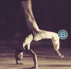 Martial Arts, Concert, Capoeira, Marshal Arts, Martial Art, Concerts, Combat Sport