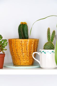 MY ATTIC SHOP / vintage / retro / flowerpot / ochre / plants / cacti / greens Photography: Marij Hessel www.entermyattic.com