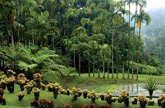 Jardin de Balata, North of Fort-de-France, Martinique. Photograph by Pack-Shot/shutterstock.com