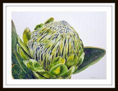 Green protea 1 Artist Lorna Pauls Done March 2017 Watercolour on quarter sheet Bockingford Watercolour Art, Wildlife, March, Green, Artist, Artists, Mac