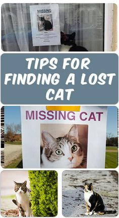 As you know cat love to play outside from times to times, and they might be lost in some ways and cannot get back home. The best way is to go out finding your lost cats or stray's owner, and these are some tips you might want to know ... Find out more by clicking on this PIN ....