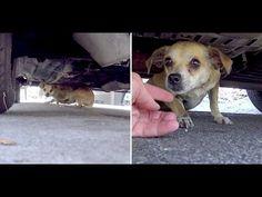 Dieser Mann verlor seinen Hund, Nach 2 Jahren sehen sie sich wieder was ...