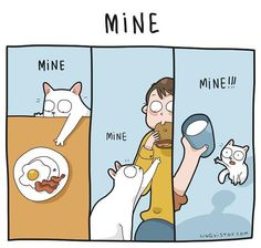 Again, I catch the hilarious moments of life of all cat owners. It is full of exciting adventures, unexpected surprises and love Cute Cats, Funny Cats, Funny Animals, Cute Animals, Cat Comics, Funny Comics, Crazy Cat Lady, Crazy Cats, Owning A Cat