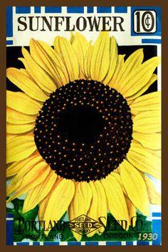 Olde America Antiques | Quilt Blocks | National Parks | Bozeman Montana : Flowers - Sunflower 4