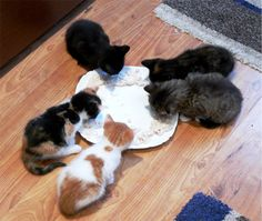 Feeding time Shag Rug, Kittens, Rugs, Home Decor, Shaggy Rug, Farmhouse Rugs, Homemade Home Decor, Kitty Cats, Types Of Rugs