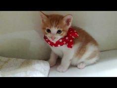 힐링동)빨간리본 아기고양이 - YouTube