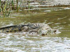 Auch Krokodile findet man hier