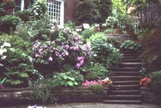 A shady sloped garden in a plantsman's garden in Toronto.  Very interesting collection of Rhododendron.