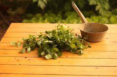 Cómo plantar cilantro