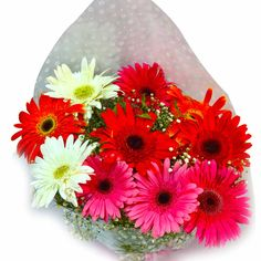 Send Lovely Flowers To Bangalore And Convey Your Feelings Viragok