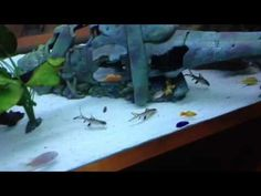 Feeding nicks mixed tank of fish