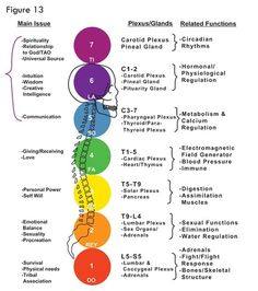 Sthula Sarira - this is the Sanskrit word for the associated nerve plexuses for each chakra. This is a really neat graphic that pictorially displays each chakra to its relevant anatomical structures along the spine, indicated by each chakra's corresponding color.