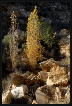 Trees growing in an old marble quarry, Almeria, Spain