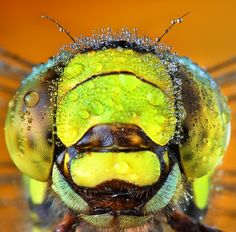 """EXTREME CLOSE UP"" by Vitor Oliveira"