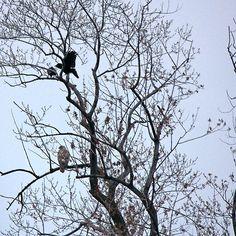Avian Quarrel in Early Spring