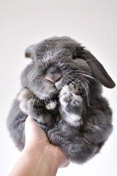 Here, bunny bunny bunny...
