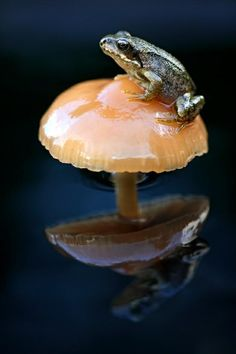 On a mushroom