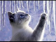 ❅ Zima, zima, zima, zima - Hana Zagorová ❅ [HD] - YouTube
