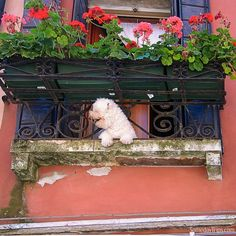 A dog's life in Venice Italy.  Does it get any better than this?