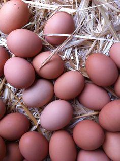 Farm fresh eggs at the Saturday market, Chico, CA.
