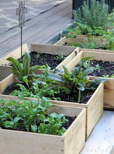 Container Gardening Idea: Make a Wine Box Salad Garden..Most wine shops sell these boxes