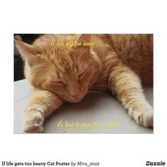 If life gets too heavy Cat Poster Relax Quotes, Lovers Photos, Cat Posters, Ways To Relax, Cat Quotes, Motivational Quotes For Life, Custom Posters, Favorite Quotes, Stress