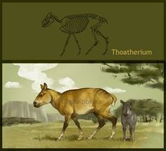 Borhyaena | generos extintos de argentina Thoatherium