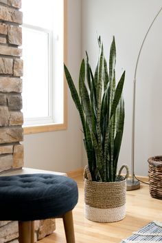 Interior Planning Tips Tricks And Techniques For Any Home. Interior design is a topic that lots of people find hard to comprehend. However, it's actually quite easy to learn the basics of effective room design. Best Air Purifying Plants, Indoor Palms, Plant Guide, Upcycled Home Decor, Snake Plant, Family Room Design, Creative Home, Decoration, Home Interior Design