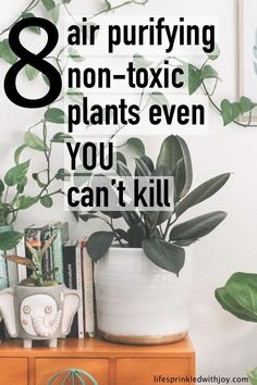 Low Maintenance Non-Toxic Air Purifying Plants For Your Home the best non-toxic air purifying plants to keep you home clean and free from harmful chemicals!the best non-toxic air purifying plants to keep you home clean and free from harmful chemicals!
