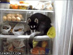 "Share this ""Fridge Dog Stays Cool"" animated gif image with everyone. Gif4Share is best source of Funny GIFs, Cats GIFs, Dog GIFs to Share on social networks and chat."