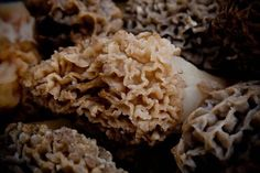 Weird but wonderful, the morel mushroom makes its appearance for a very short season each year in mid-Spring