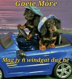 G Morning, Morning Qoutes, Morning Blessings, Good Morning Wishes, Lekker Dag, Afrikaanse Quotes, Goeie More, Good Night Quotes, Disney Films