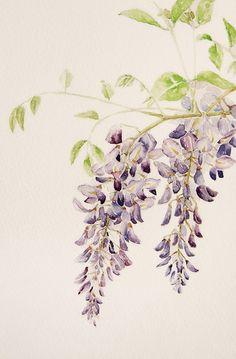 Rose Illustration, Botanical Illustration, Botanical Drawings, Botanical Art, Watercolour Painting, Watercolor Flowers, Watercolor Pictures, Asian Art, Japanese Art