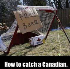 A funny picture showing a crazy way to catch a Canadian. You have to make a trap and put some beers as a bait. Soon the Canadian will be caught.